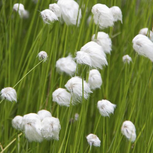 Extrêmement Fleur qui fleurit en mai : liste - Ooreka AQ38