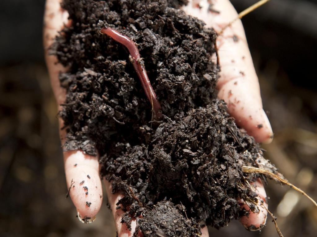 Vers de compost