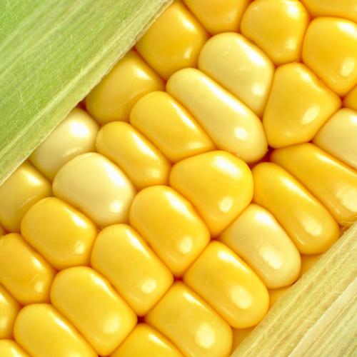 Faire cuire du maïs