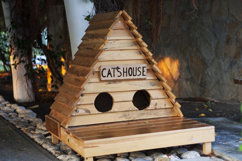 797b116d28415c Maison pour chat   propriétés, usages, modèles, prix - Ooreka