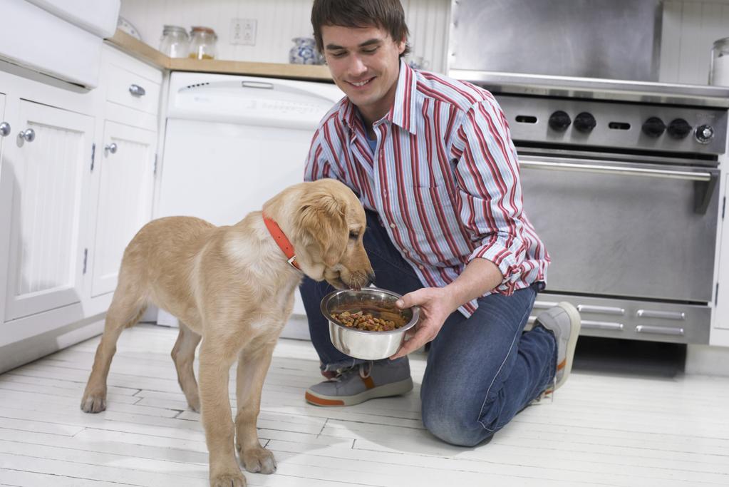 Perte de poids du chien