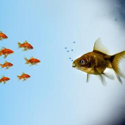 Poisson rouge aquarium ses besoins comprendrechoisir for Poisson rouge artificiel