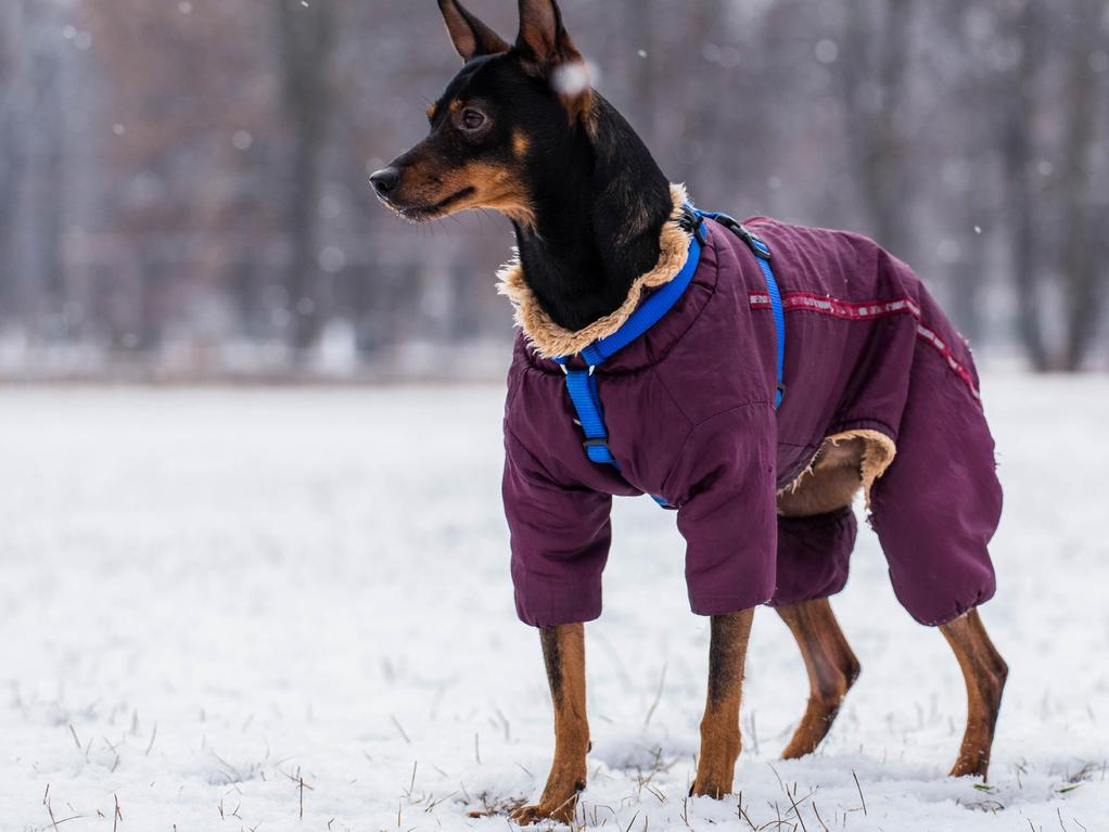 Vêtement pour chien : types, utilité, critères de choix