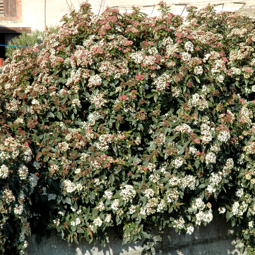 Créer un massif fleuri en hiver - Aménagement de jardin