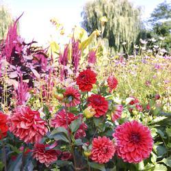 Engrais de floraison