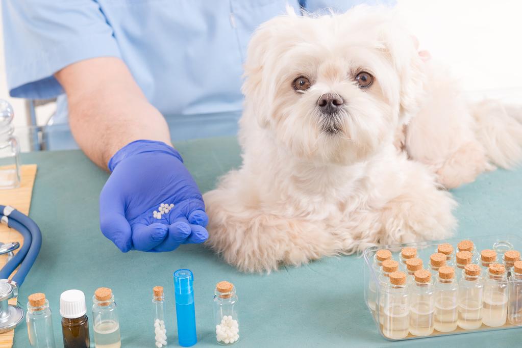 Médicaments pour chien