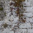 Traitement anti-mousse de façade
