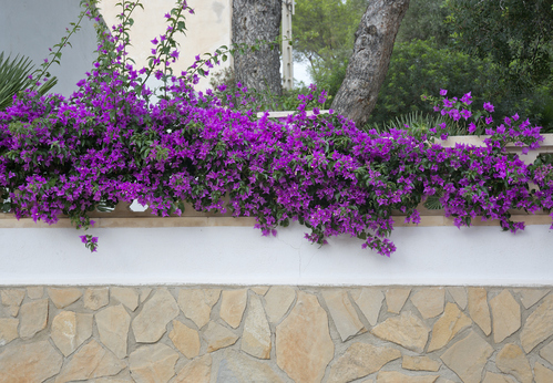 Fleurissez le dessus du muret