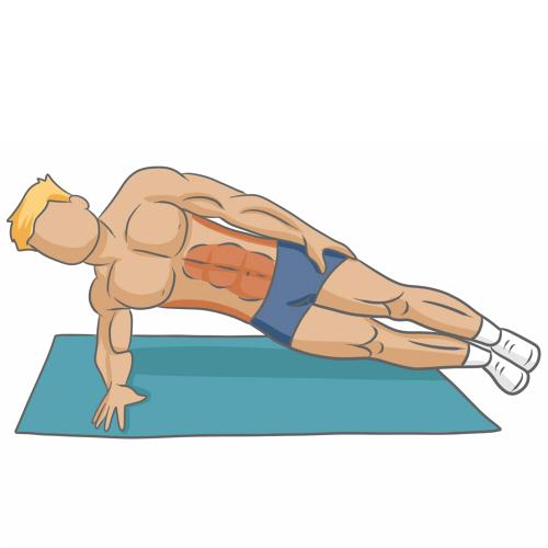 Bien muscler ses abdominaux - Musculation