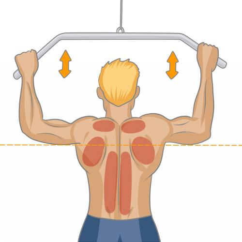 banc de musculation quel muscle travaille