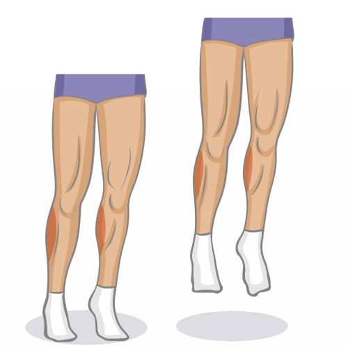 Bien muscler ses mollets - Musculation