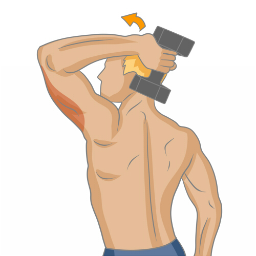 Bien muscler ses triceps - Musculation 7a32e132aa1