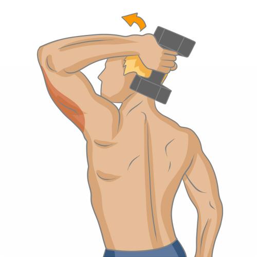 Bien muscler ses triceps - Musculation d292bd22d5a