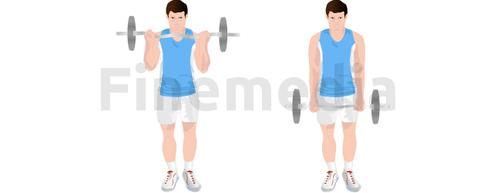 Musculation bras et curl à la barre