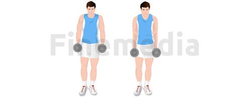 Shrugs et musculation du dos