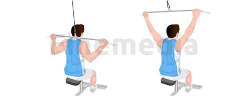 Musculation du dos et tirage nuque