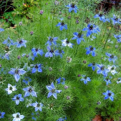 Definition Fleur Bleue Gite Pompadour Lubersac