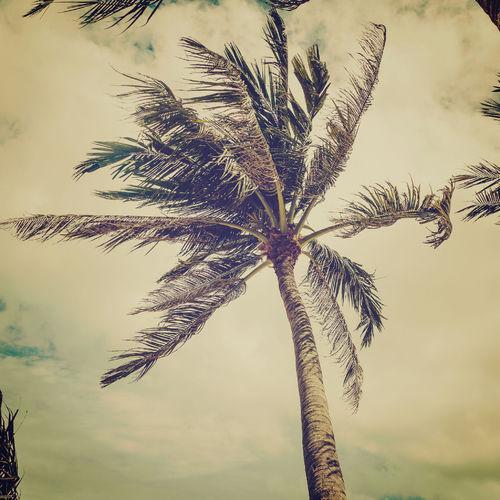 Râpez de la noix de coco