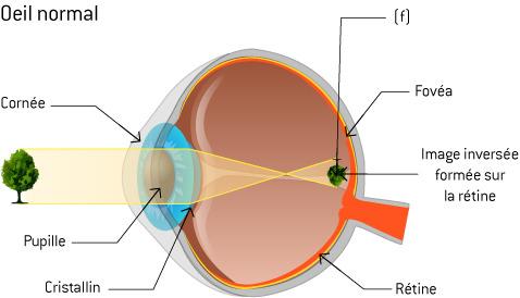 Optique   la physique des lunettes - Ooreka ebb709a3184a