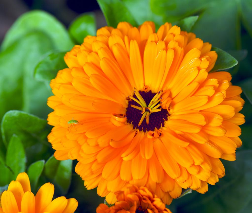 18 Exemples De Plantes Increvables