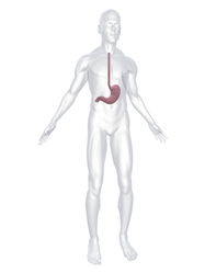 Schéma ebook anatomie oesophage