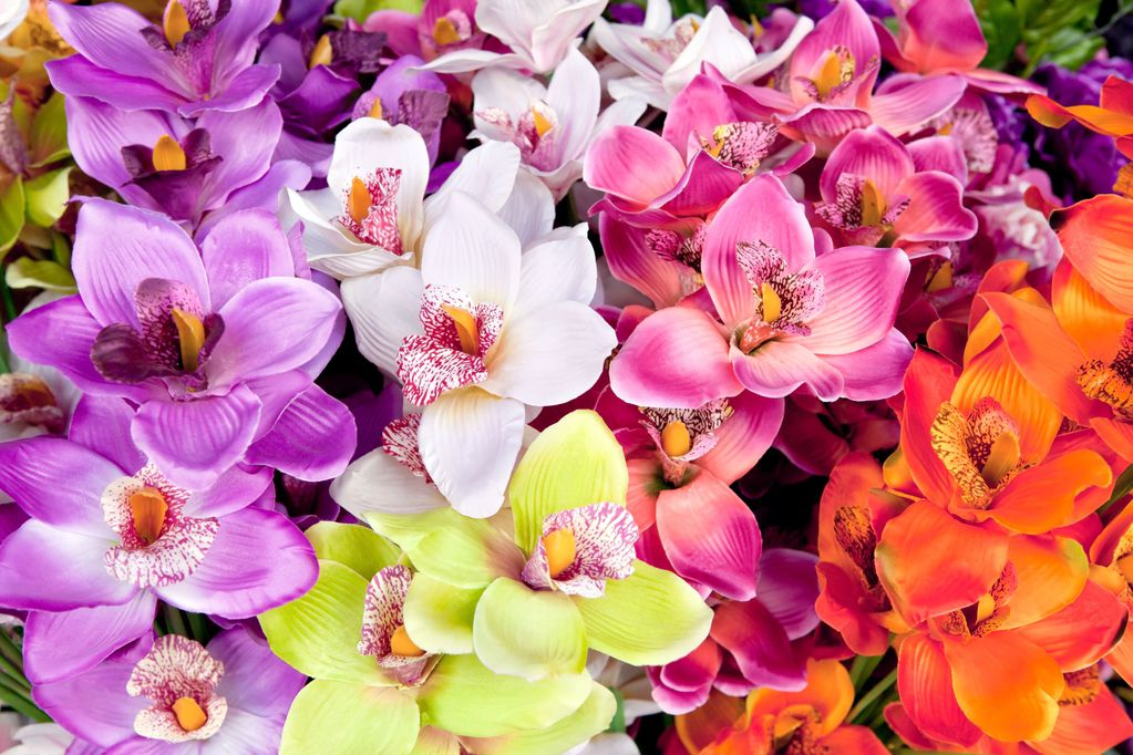orchid e artificielle choix d 39 une orchid e artificielle. Black Bedroom Furniture Sets. Home Design Ideas