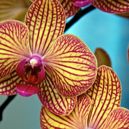 langage des fleurs 10 plantes pour s 39 exprimer ooreka. Black Bedroom Furniture Sets. Home Design Ideas