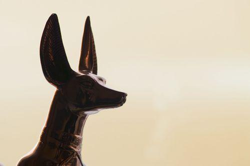 Origine et ancêtres du chien