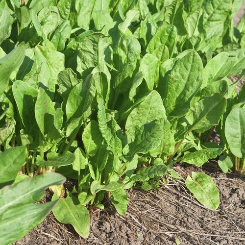 Quelles plantes aromatiques r colter en mars - Quelles sont les plantes que l on peut bouturer ...