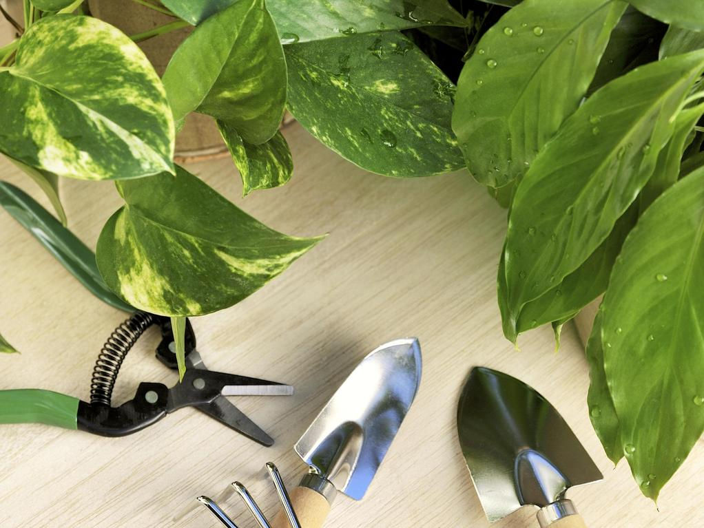 Choix de ses plantes d int rieur erreurs viter for Achat plante interieur