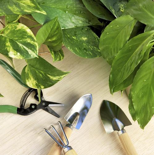 Checklist du jardin pour un hiver tranquille jardinage for Couverture plante hiver