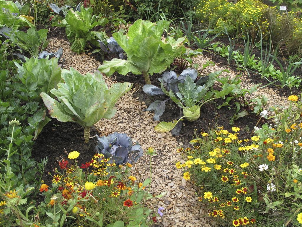 Jardiner sans b cher pas de travail du sol ooreka - Refaire sa pelouse sans retourner terre ...