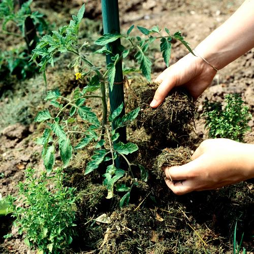 fabriquer un paillis jardinage