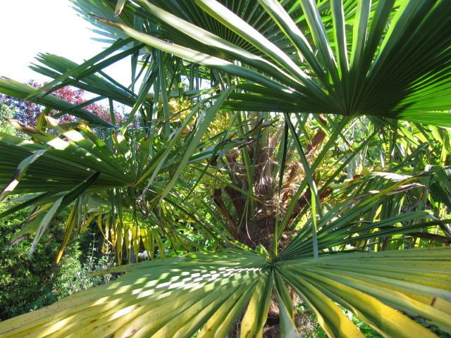 Fruit du palmier caract ristiques des fruits de palmier - Image palmier ...