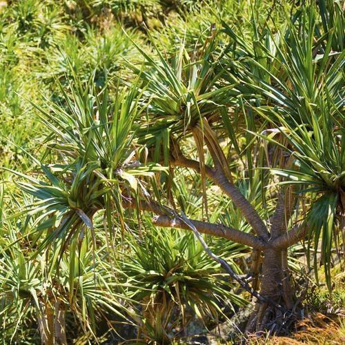 arbre pour terrasse : liste - ooreka