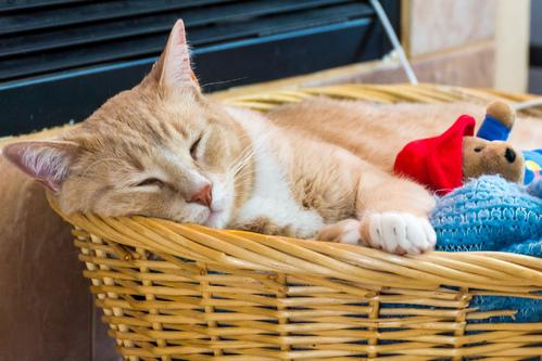 Panier à chat