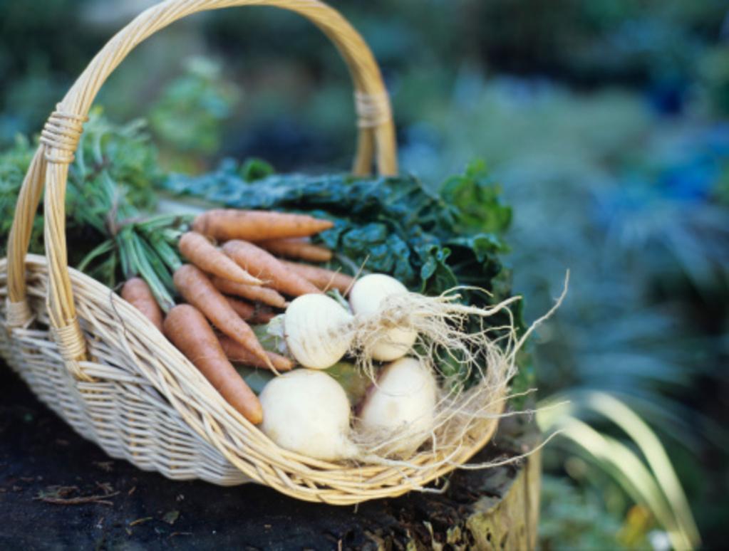 1m² de potager = 75€/an d'économie en fruits et légumes