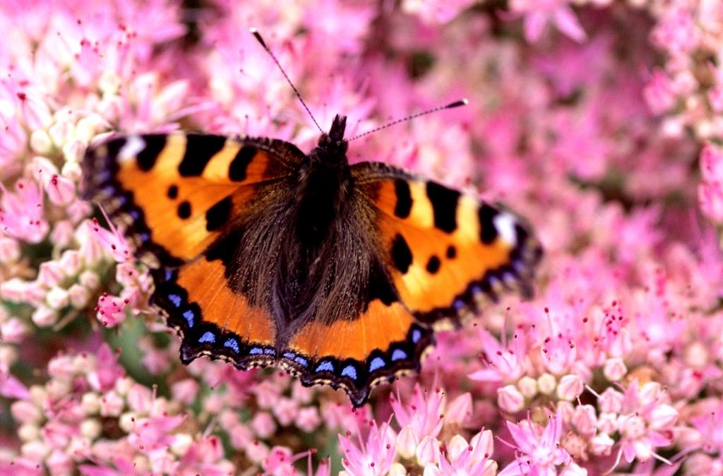8 façons d'attirer la faune dans votre jardin