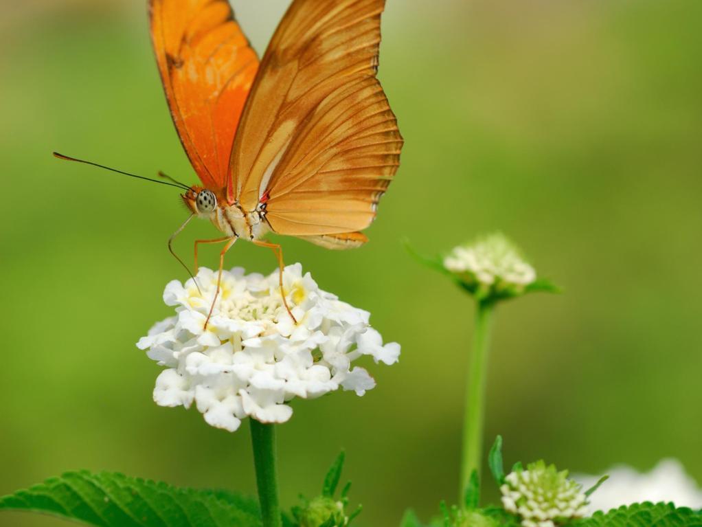 utilit des papillons au jardin