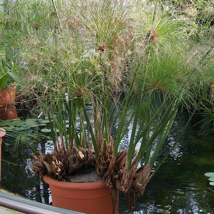 Plantes pour balcon liste ooreka for Grande plante en pot exterieur