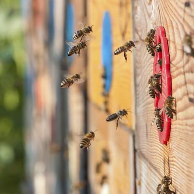Parrainage d'une ruche : concept et avantages