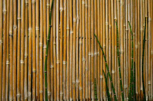 paravent bambou exterieur great paravent en bois exotique de x x cm with paravent bambou. Black Bedroom Furniture Sets. Home Design Ideas