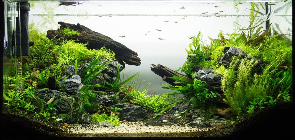 Aquascaping : definition et techniques - Ooreka