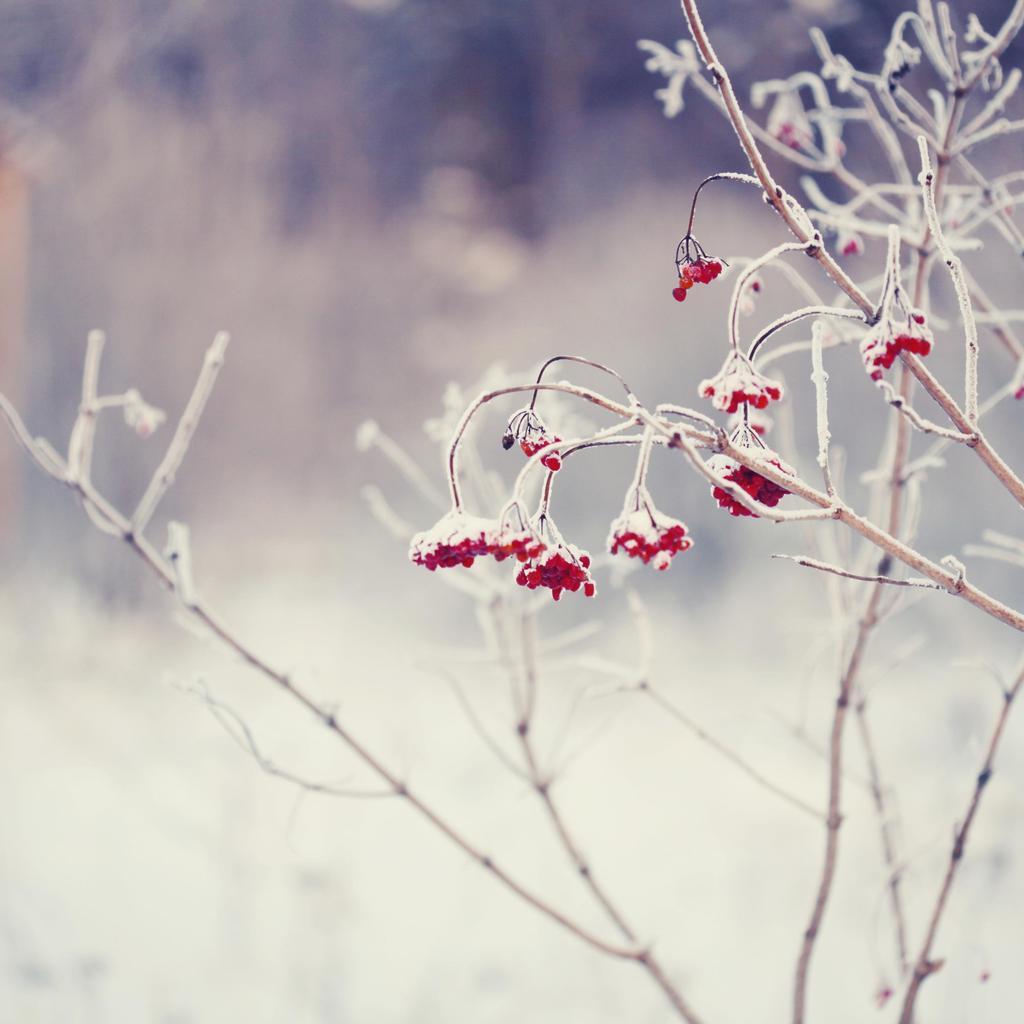 Les plantes rustiques
