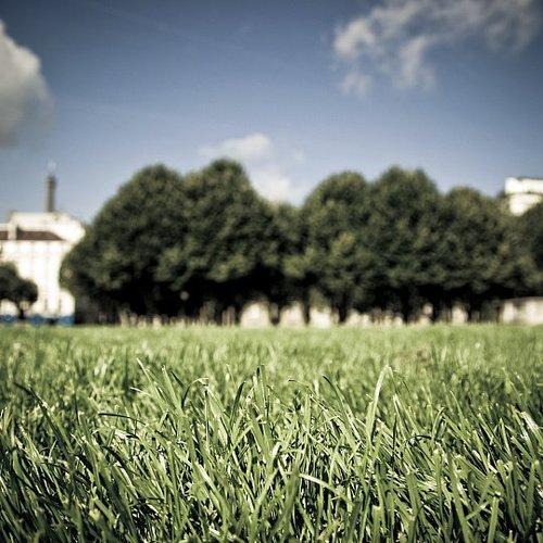 Que faire en février pour la pelouse ?