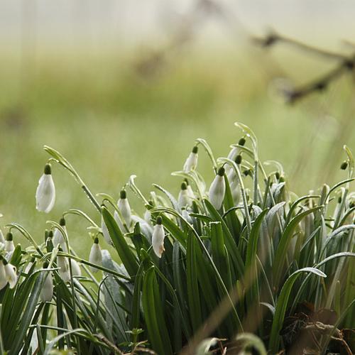 Travaux de jardinage en janvier ooreka Jardinage en janvier
