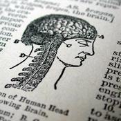 Extrait dico schéma cerveau