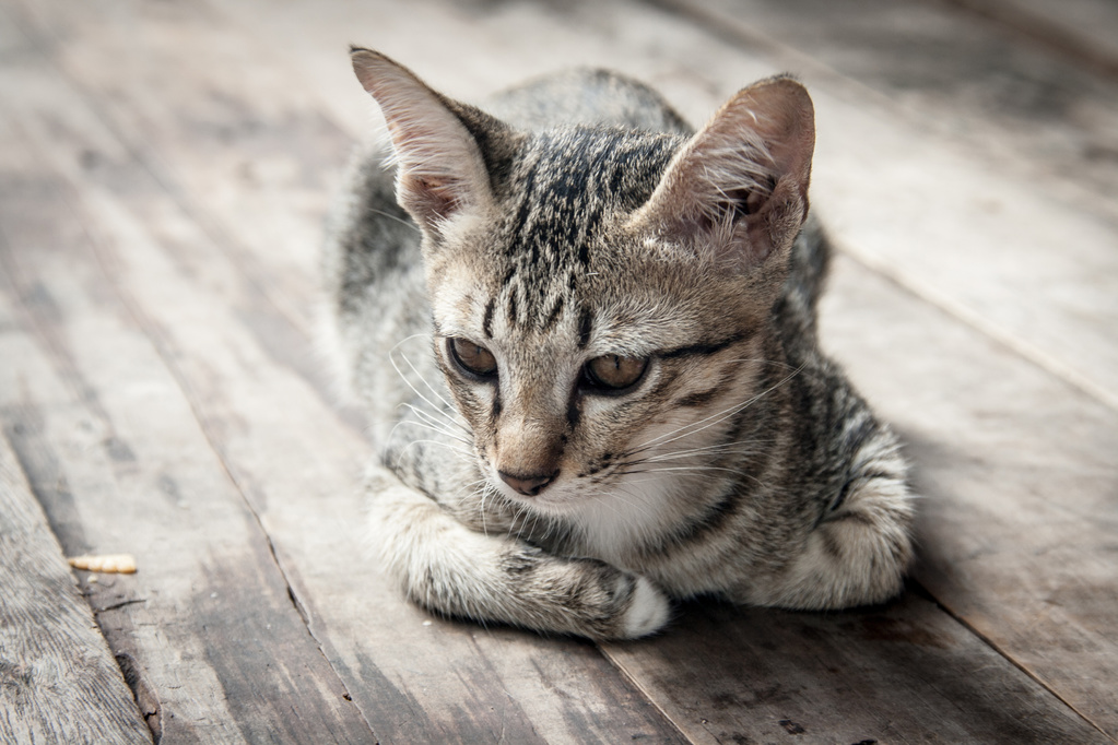 Mon chat perd du poids, que faire ?