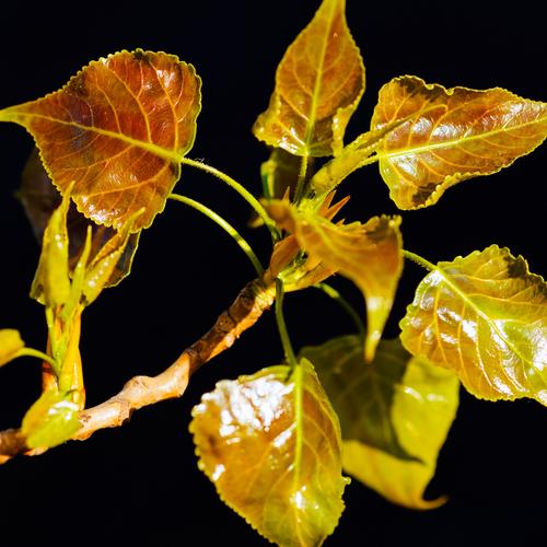 Feuilles d 39 arbres comment les reconna tre ooreka for Arbres a feuilles persistantes