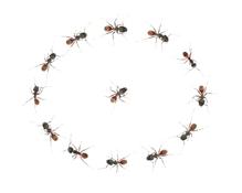 Répulsif fourmis